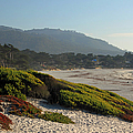 Coastal View - Ice Plant  by Suzanne Gaff