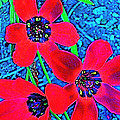 Color 1 by Pamela Cooper