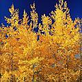 Colorado Autumn by Danielle Marie