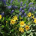 Colorado Wildflowers by Lynn Bauer