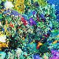 Coral Reef by Roy Pedersen
