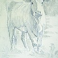 Cow by Mike Jory