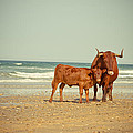 Cows On Sea Coast by Raimond Klavins