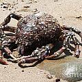 Crab Beach by Henrik Lehnerer