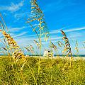 Crandon Park Beach by Raul Rodriguez
