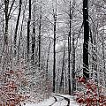 Danish Winter  by Jean Schweitzer