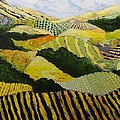 Delta Fields by Allan P Friedlander