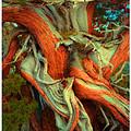 Deranged Redwood by Lar Matre