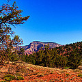 Diamondback Gulch Near Sedona Arizona by David Patterson