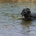 Dog Ball Water by Henrik Lehnerer