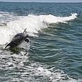 Dolphin Leap by Deborah Good