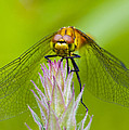 Dragonfly by Chris Smith