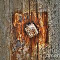 Driftwood by Jacklyn Duryea Fraizer