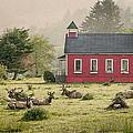 Elk In The School Yard by John Trax
