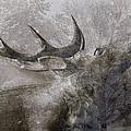 Elk In Winter by Suzanne Powers