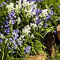 English Country Garden by Mark Llewellyn