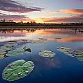 Everglades At Sunset by Debra and Dave Vanderlaan