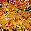 Fall Colors 2014-3 by Srinivasan Venkatarajan