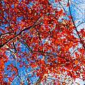 Fall Colors by Tinjoe Mbugus