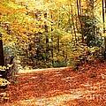 Fall Foliage by J McCombie