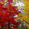 Fall Leaves by Ariane Moshayedi