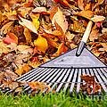 Fall Leaves With Rake by Elena Elisseeva
