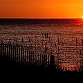 Fence And The Sun by Michael Thomas