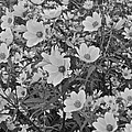 Field Of Flowers by Frozen in Time Fine Art Photography