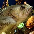 Fish by Jesse Harris
