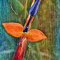 Floral Contentment by Deborah Benoit