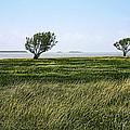Florida Bay Everglades by Rudy Umans