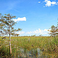 Florida Everglades by Rudy Umans