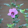 Flower by Ashley Cox