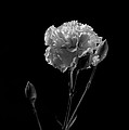 Flower by Catherine Lau