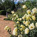 Flower Garden  by Tinjoe Mbugus