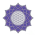 Flower Of Life by Galactic  Mantra