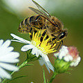 Flowering Bee by Optical Playground By MP Ray