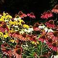 Flowers Gone Wild by Lilliana Mendez