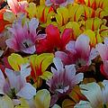 Flowers by Jeffery L Bowers