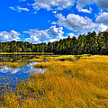 Fly Pond In The Adirondacks by David Patterson