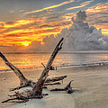 Folly Beach Driftwood by Keith Allen