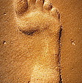 Footprint by Paul Wilford