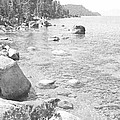 Forested Shores Of Lake Tahoe by Frank Wilson