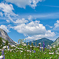 Franconia Notch - Lupine And Daiseys  by Scott Thorp
