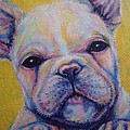 French Bulldog by Jack No War