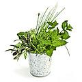 Fresh Herbs by Elena Elisseeva