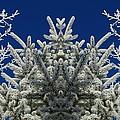 Frosty by Janice Westerberg