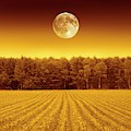 Full Moon Over A Field by Detlev Van Ravenswaay