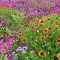 Garden Delight by Lynn Bauer