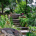 Garden Steps by Denise Mazzocco